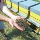 Articolo Corriere della Sera sulle api e l'Expo 2015.